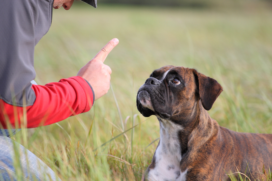How to Deal with Age-Related Hearing Loss in Dogs